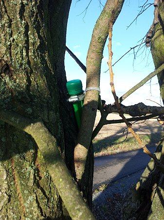 oben im Baum